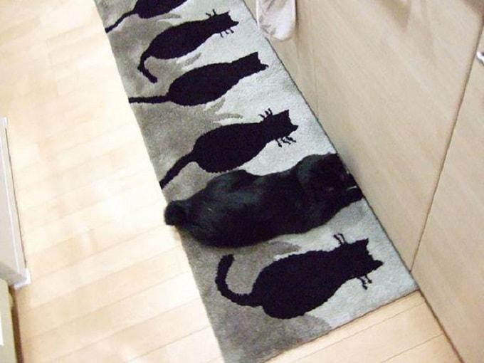 черный кот на коврике