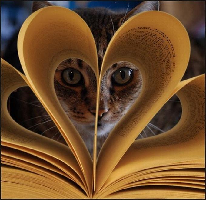 книга и кот