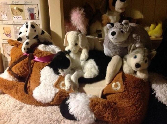 кот в игрушках