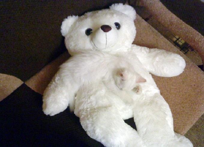 кошка на мишке