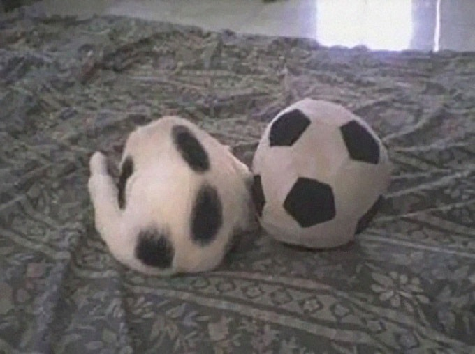 котик как мячик