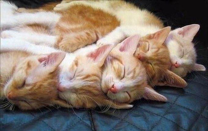 Родились у нас котята. Раз, два, три, четыре, пять
