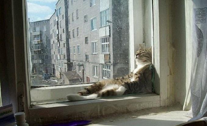 кот в релаксе