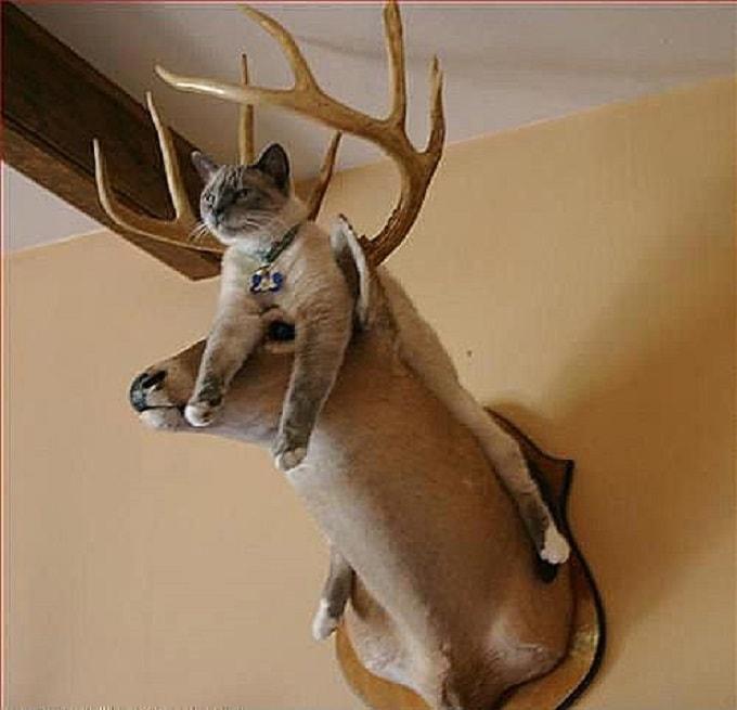 кот на олене