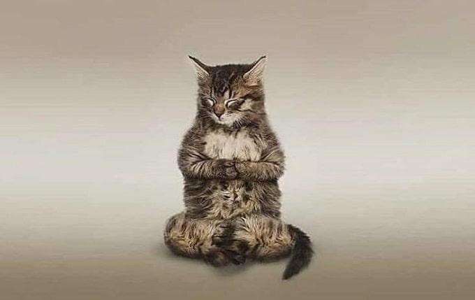 кот в медитации