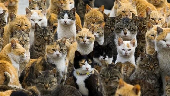 много котов и кошек