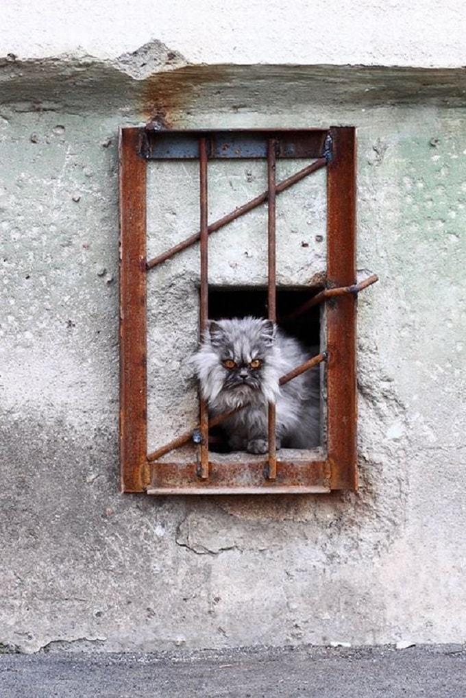 кот в неволе