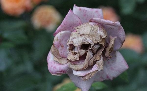 цветок череп