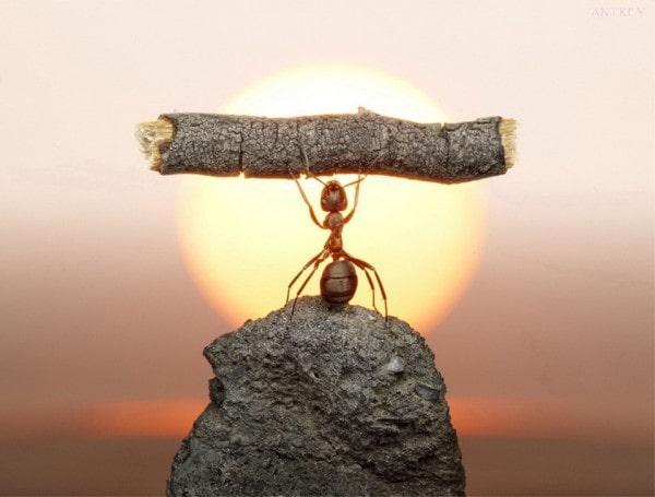 муравей на закате